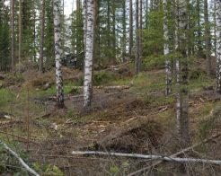 """""""Tilaajavastuulain valvonta edellytys uusien kuljettajien saamiseksi metsäkonealalle"""""""