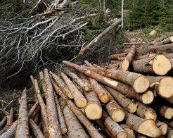 FFC: Skogsindustrins beslut att lösgöra sig från kollektivavtalen verkar ogenomtänkt