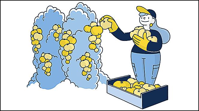 Справочник по трудовым условиям для сезонных работников в сельском хозяйстве